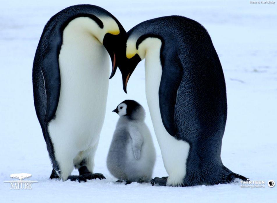 Cute Penguins Animals Wallpaper Eazy Wallpapers
