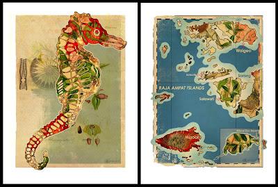 Diving, Sealife, Prints, Misool, Indonesia