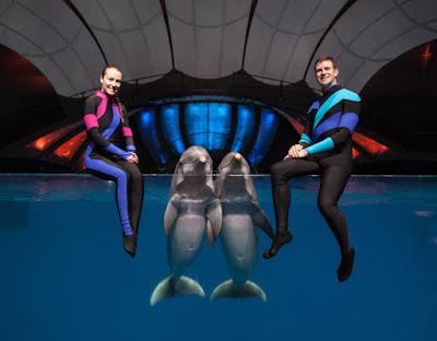 AT&T Dolphin Celebration | Georgia Aquarium