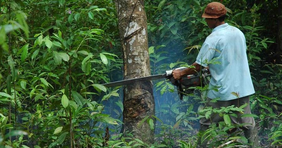 Illegal Logging ~ Blogging a Blog