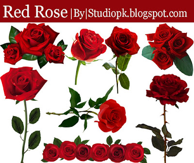 Red Rose Png Flower Image
