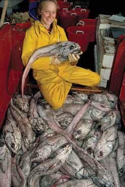 Ikan grenadier