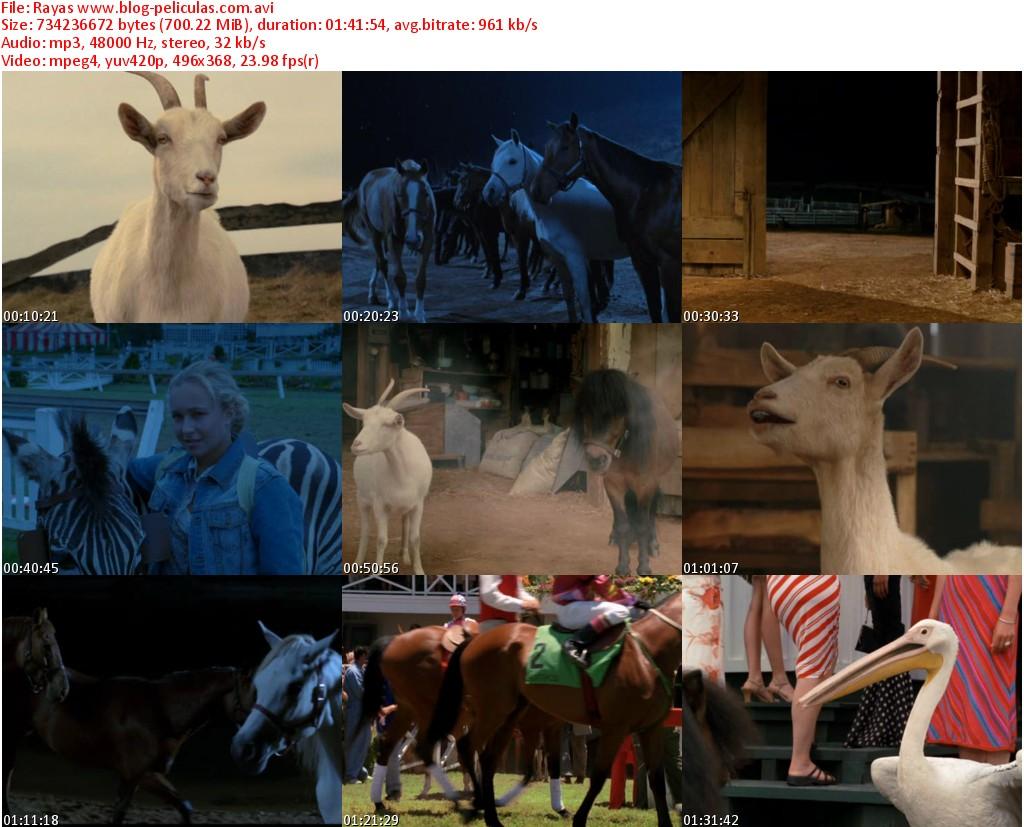 Descargar Rayas Audio Espanol Latino Dvdrip 2005