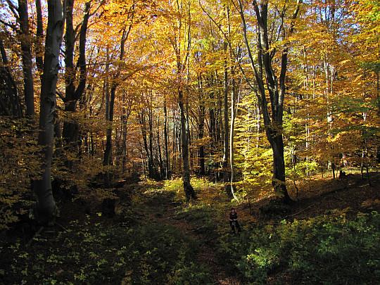 Leśna wędrówka na Kozie Żebro.
