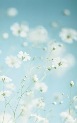 fleurs-brise-vent-ciel-bleu