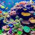 Tα πρώτα γενετικά τροποποιημένα κοράλλια