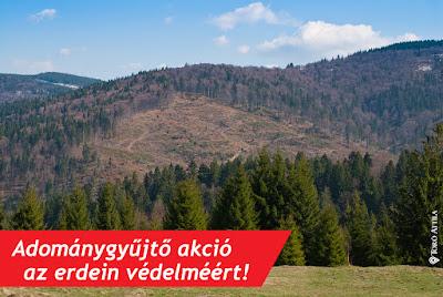 adománygyűjtés, Hans Hedrich, Neuer Weg Egyesület, Wild Kingdom program, Háromszéki Közösségi Alapítvány, Holzindustrie Schweighofer, Bankwatch Romania,
