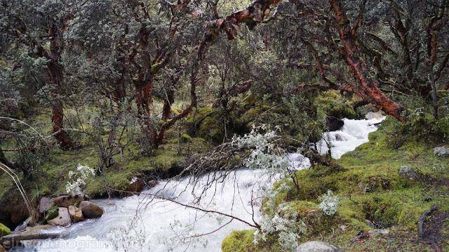 rio, cordillera blanca, yungay, llanganuco