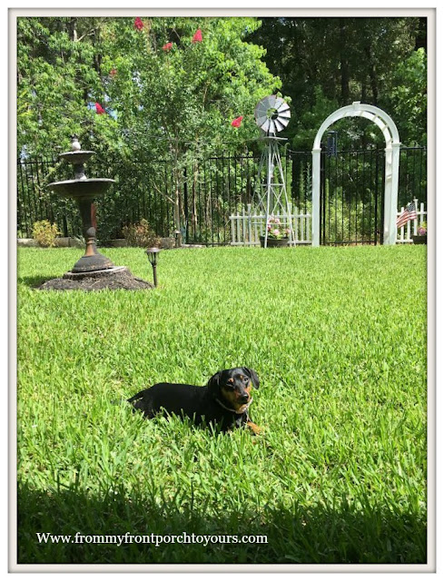 Suburban Farmhouse Backyard-Mini Doxie- From My Front Porch To Yours
