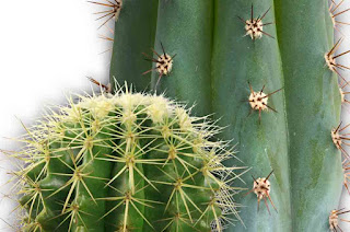 Benefits of Cactus