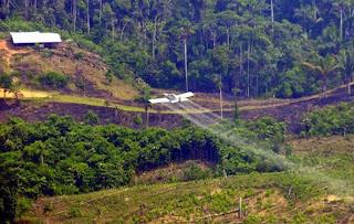 Colombia busca recuperar bosques degradados por el conflicto