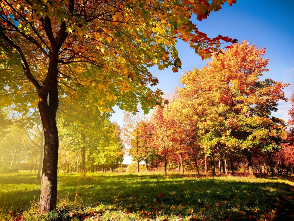 Autumn Season Standard Resolution HD Wallpaper 21
