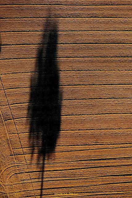 ombre d arbre dans les champs