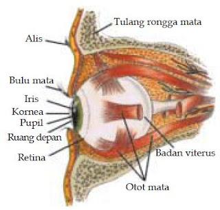 Pengertian Alat Optik dan Macam-macam Jenis Contoh Alat Optik