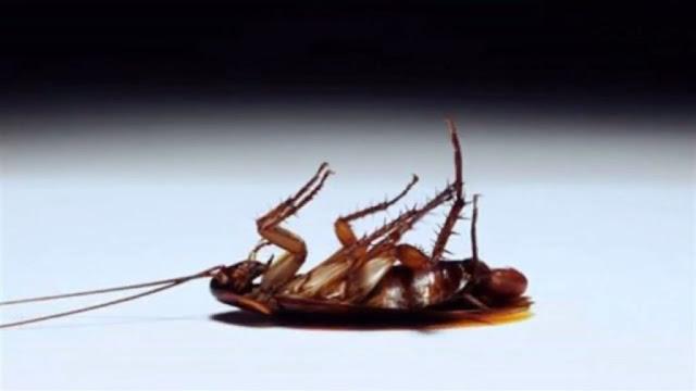 تخلصي من الصراصير في منزلك