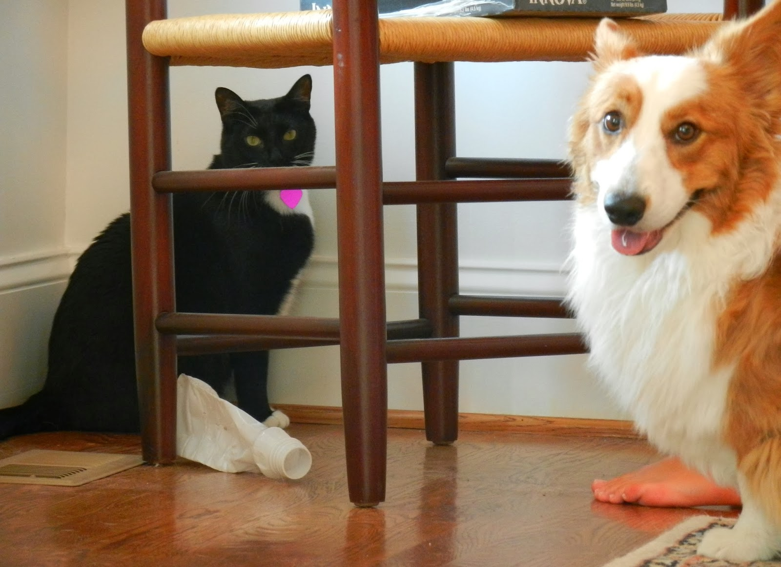 Funny Talking Dogs And Cats