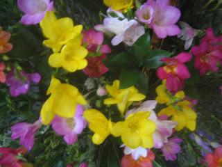 個々のお花のアップ