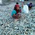 VIRAL : Ikan terdampar dikatakan TSUNAMI bakal berlaku