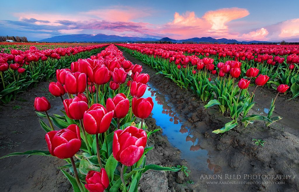 30 Most Colorful Flower Fields Best Photography Art