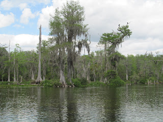Wakulla Springs State Park River Tour Florida