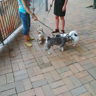 blackberry q5 photo samples street daylight dogs