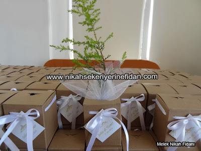 nikah fidanı Eskişehir Selin Tamer nikah çamı - 5