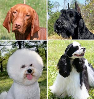 Dog health-dog-pet-dog breeds-pets