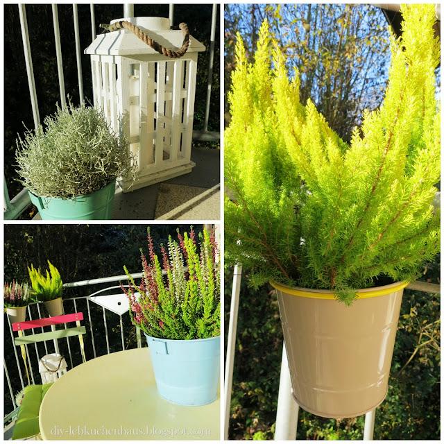 Balkonpflanzen winterhart