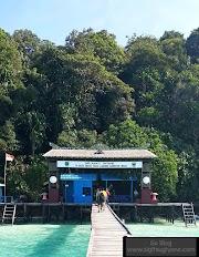 Berenang Bareng Ubur-Ubur di Pulau Kakaban