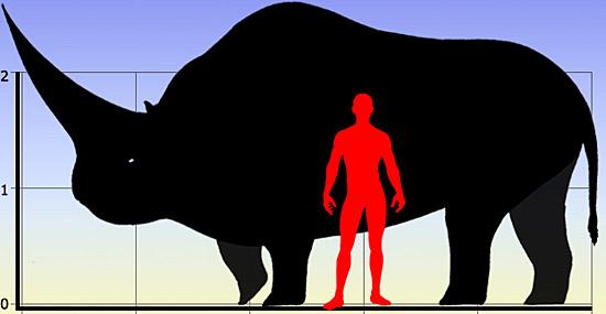 Elasmotherium sibiricum comparação de tamanho