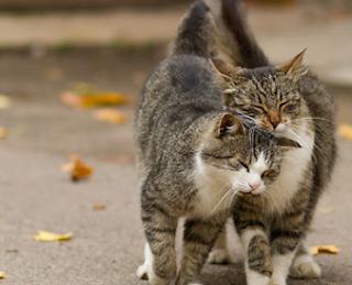 Kiat Kucing Manja kepada Tuannya