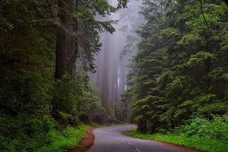 Image: Redwood National Park, California, on Pixabay