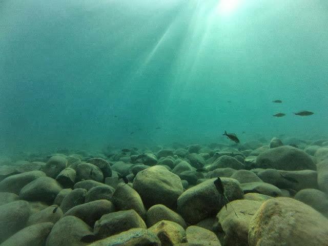 biotop tanganika, biotope, aquarium biotope, akwapasja