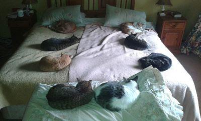 Quien con gatos se acuesta, duerme donde le dejan