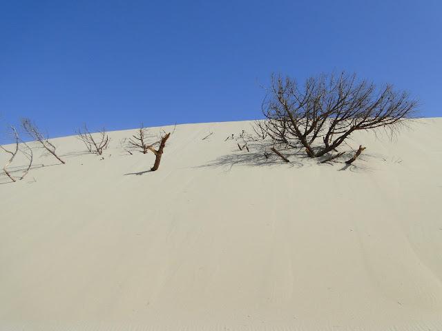 Vegetación enterrada en Tarifa