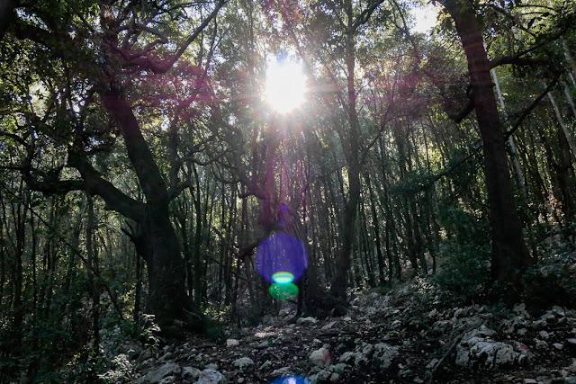 Bosco sul monte Soratte con flare