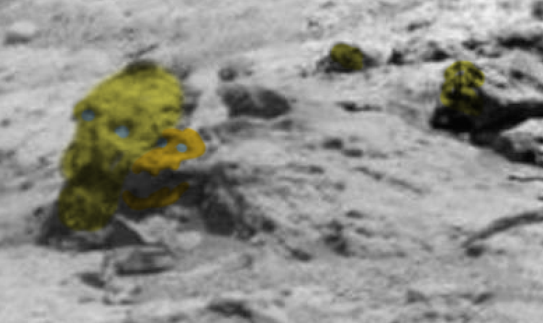 nasa rover spots claw of living alien on mars - 777×463