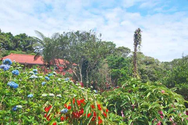 flowers, gardens, house, Hydrangea, Okinawa