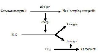 reaksi kemosintesis