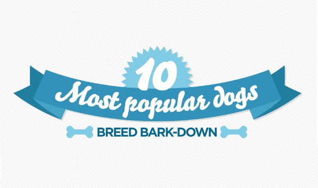 The 10 Most Popular Dogs: Breed Bark-down