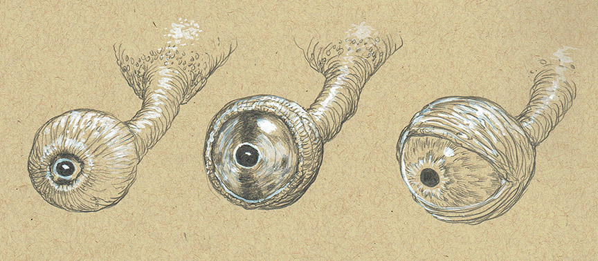 £ sketches of some eyeballs on stalks; the first shows the eyelid completely closed; the second open with a darker iris and the third open open and more human looking