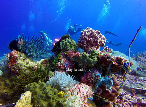 Dive Package Komodo Island MIDE