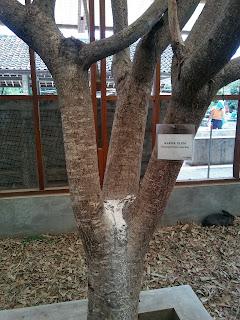 Pohon pun kaffir :D