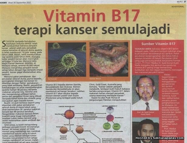 B17 Biji Aprikot