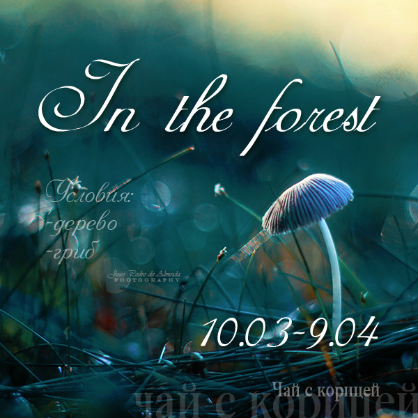 """Задание """"In the forest"""""""