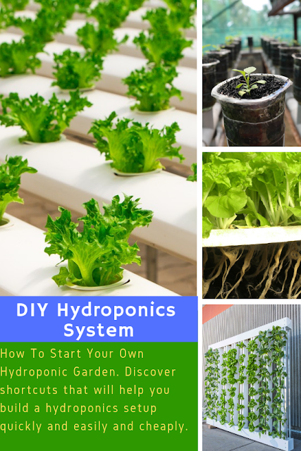 Hydroponics, simply described, is a method of growing plants with the use of water mixed nutrition solution.