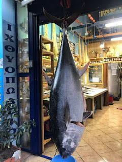 Τούνα 130 κιλών αλιεύθηκε σε θαλάσσια περιοχή του Αστακού-πωλήθηκε εν ριπή οφθαλμού από ιχθυοπωλείο του Αγρινίου (φωτο)