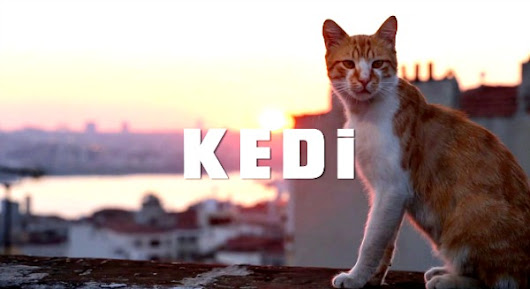 Caturday Movies - Interview with Kedi director Ceyda Torun