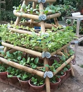how to grow vegetables on a narrow land