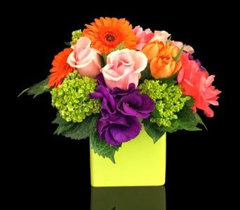 http://www.stapleton-floral.com/boston-flowers/luminous-588690p.asp?rcid=105200&point=1